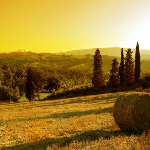 Tuscany Piedmont Wine & White Truffle