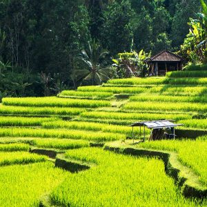 Oferte Bali 2018