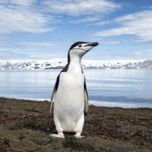 Antarctica Express: Ushuaia-Punta Arenas-Antarctica