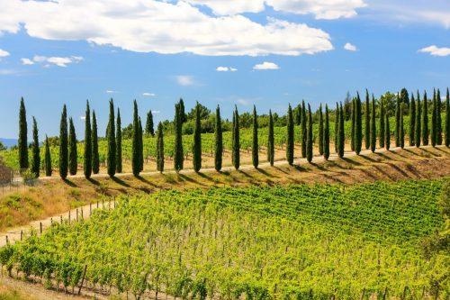 Fly & Wine - Zboară către podgoriile de vin din Italia!